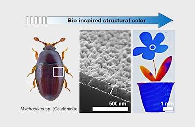 Flexible and Cost-effective Fabrication of Nature Inspired Structural Colors