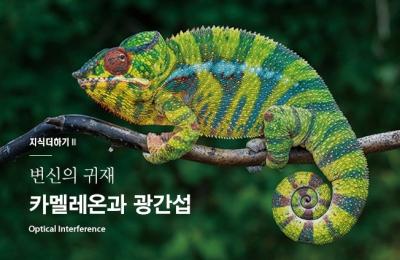2018 겨울호 / 지식더하기 Ⅱ / 변신의 귀재 카멜레온과 광간섭