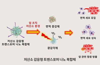 화학 김원종 교수팀, 암 꼼짝마! 암 찾아 레이저·면역 세포 활성화로 동시에 2번 공격하는 나노머신 개발