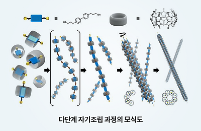 화학 김기문 교수팀, 레고 블록처럼 자기조립하는 인공 미세소관 개발